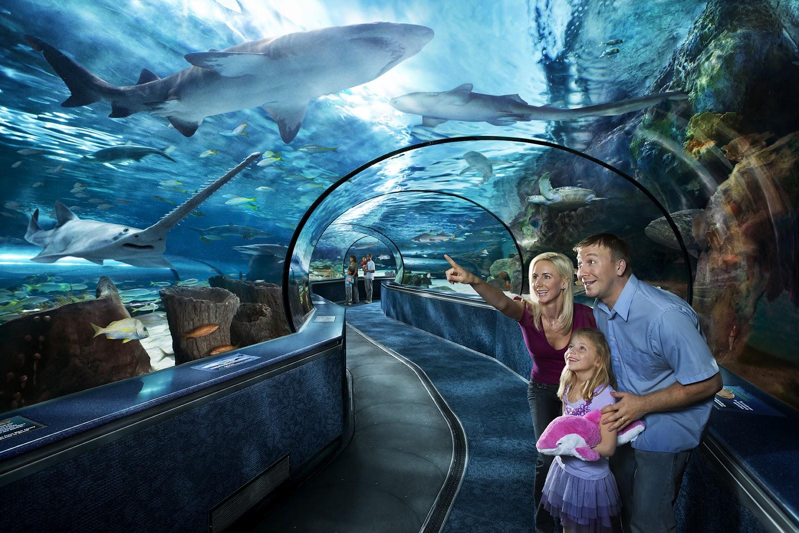 Ripley's Aquarium Vacation Activity Guide