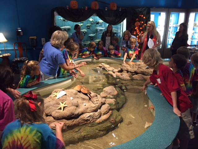 kids-activities-ocean-isle-beach-museum-of-coastal-carolina
